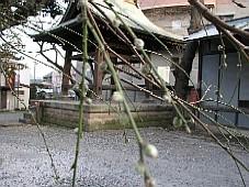2009031813.JPG