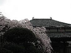 2009032402.JPG