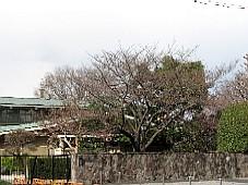 2009032610.JPG