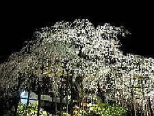2009033009.JPG