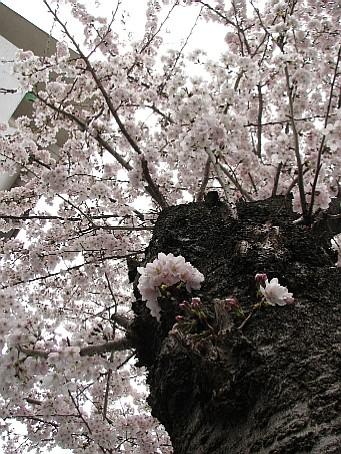2009040808.JPG
